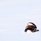 Snow Dweller by seawhisper