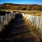 Slippery Path by Richard Hamilton-Veal