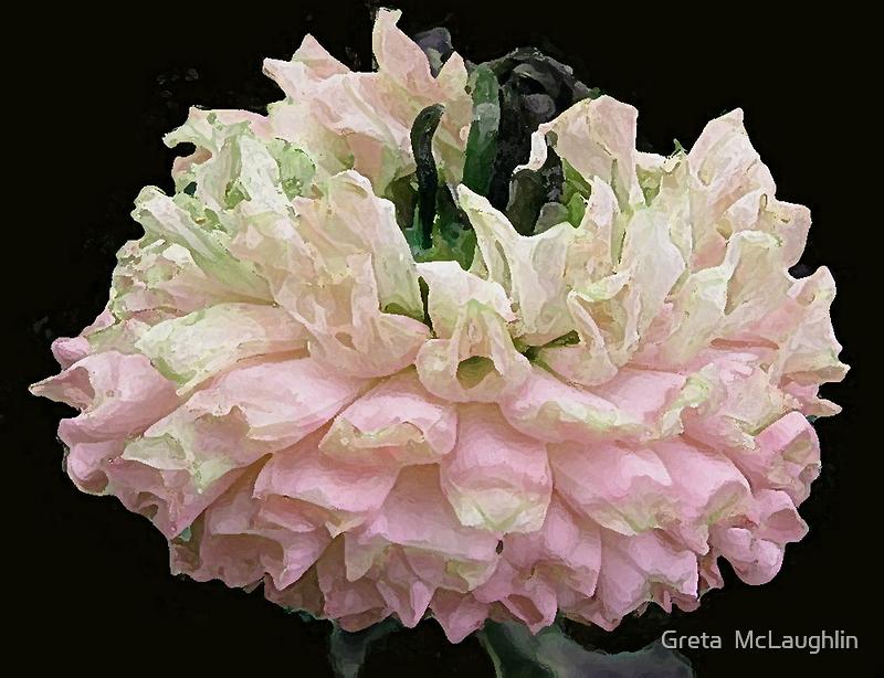 Faded Rose by Greta  McLaughlin
