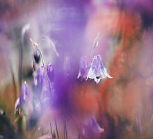 Through the Silky Veils by tanjica