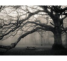 The Troll Tree Photographic Print
