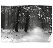 Winter Walk ~ Hossler's Trail Poster