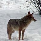Inga Coyote came to visit Buddy by Edward Henzi