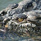 Up close and personal - Kakadu National Park,  Northern Territory, Australia by Lynda Harris