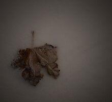 THE LONER by June Ferrol