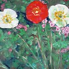 Red and White Poppies in Garden by John Fish