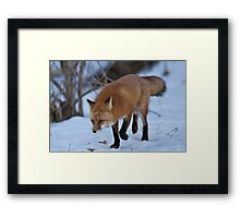 Prowling Around Framed Print