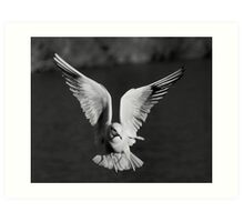 Angel Gull Art Print