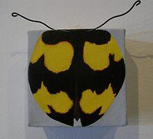 Lady beetle - Illeis galbula  by suzi krawczyk