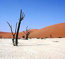 Sossusvlei, Namibia Africa by Bernadette Ulbrich-Hooper