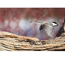 Fly thru - Drive thru Chickadee Photographic Print