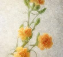 Orange Carnations 1 by Christopher Johnson