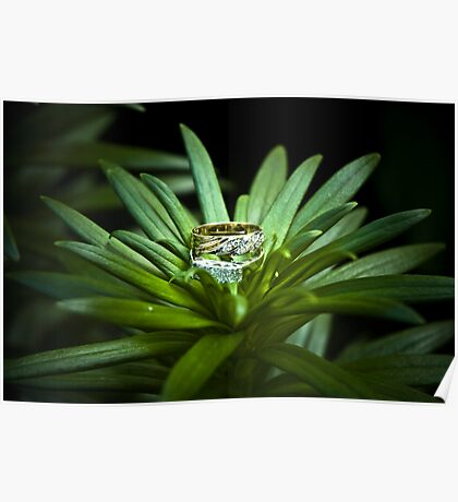 Formal wedding ring resting in the grass. Poster
