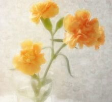 Orange Carnations 2 by Christopher Johnson