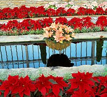 Holiday Reflections @ como park  by Diane Trummer Sullivan
