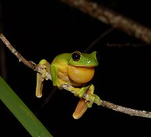 Australian Red Eyed Tree Frog by NickBlake