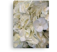 Blue Tipped White Hydrangea Flowers Canvas Print