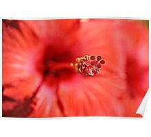 Red Hibiscus 1 Poster