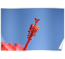 Red Hibiscus 4 with Blue sky Poster