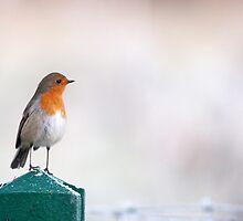 Winter Robin by Sarah-fiona Helme