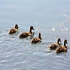 Ducklings by Alyce Taylor