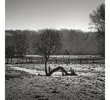 Reborn ... Photographic Print
