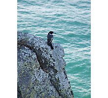 Butcher Bird blue, Byron Bay, NSW Photographic Print