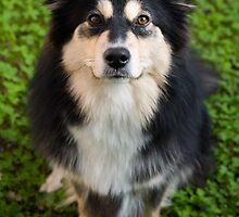 Dog in Clover by TerraNik
