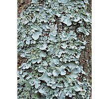 Lichen Green, Bunya Mountains, QLD Photographic Print