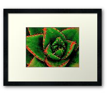 Green Succulent Framed Print