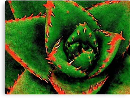 Green Succulent by Julie Marks