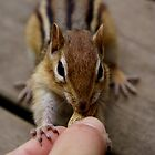 Chippy by Sarah Lisk Photography