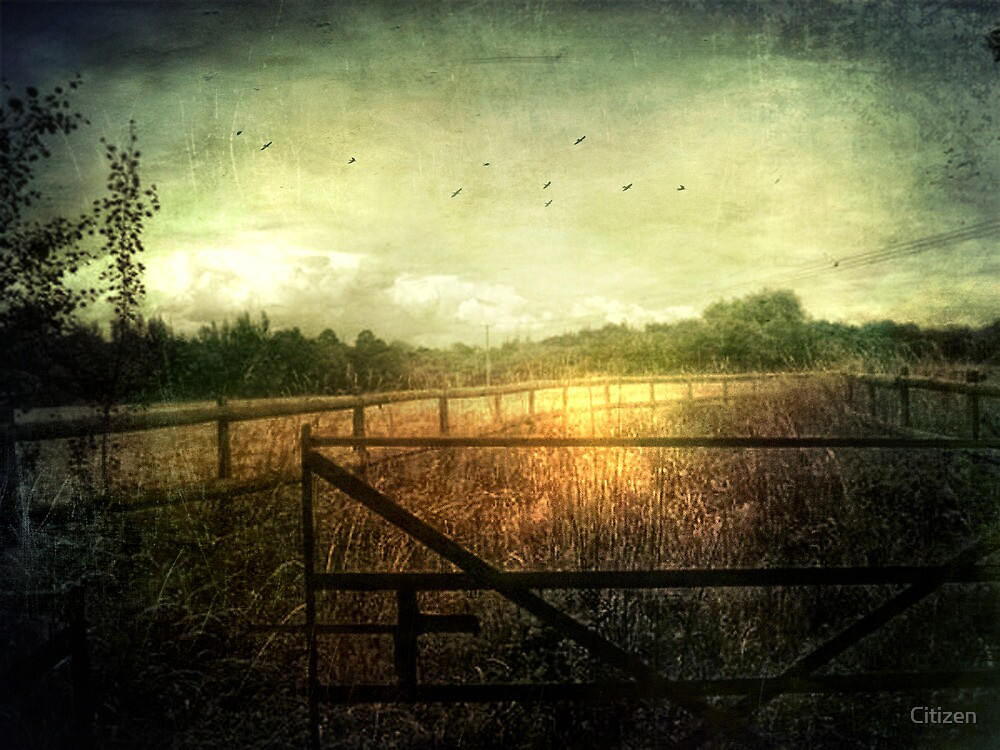 Paths to Gold by Nikki Smith