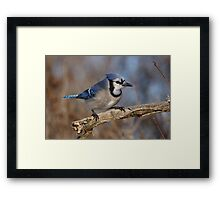 Eye-Sparking Jay Framed Print