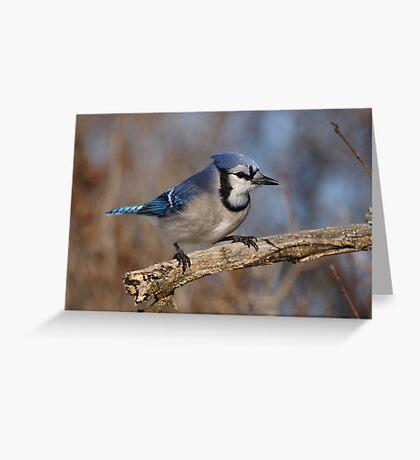 Eye-Sparking Jay Greeting Card