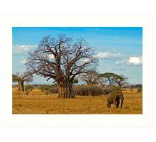 Baobab Tree (Adansonia digitata) Art Print