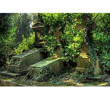 Nature overcoming graves Photographic Print