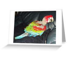macaw 8 weeks Greeting Card