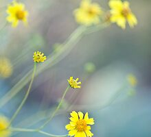 Flowers are Sunshine by Rachelle Vance