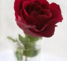 Single Red Rose in Glass by Christopher Johnson