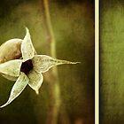 rose hip by Priska Wettstein
