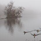 Foggy River by balexander101