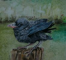 Young crow on graveyard by Astrid de Cock