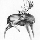 Fallow Deer Stag by Patricia Howitt