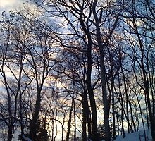 Evening After Big Snowstorm (3) by SylviaS