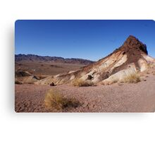 Desert Brush Canvas Print