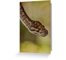 Snakes Alive - carpet python Greeting Card