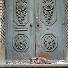 Jersey City Cat by Jim Legge