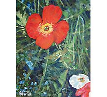 Garden with Bright Red and White Poppies Photographic Print