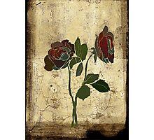 2 roses - valentine day Photographic Print